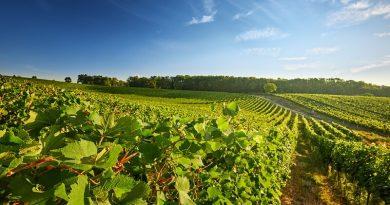Agricultura_IBM